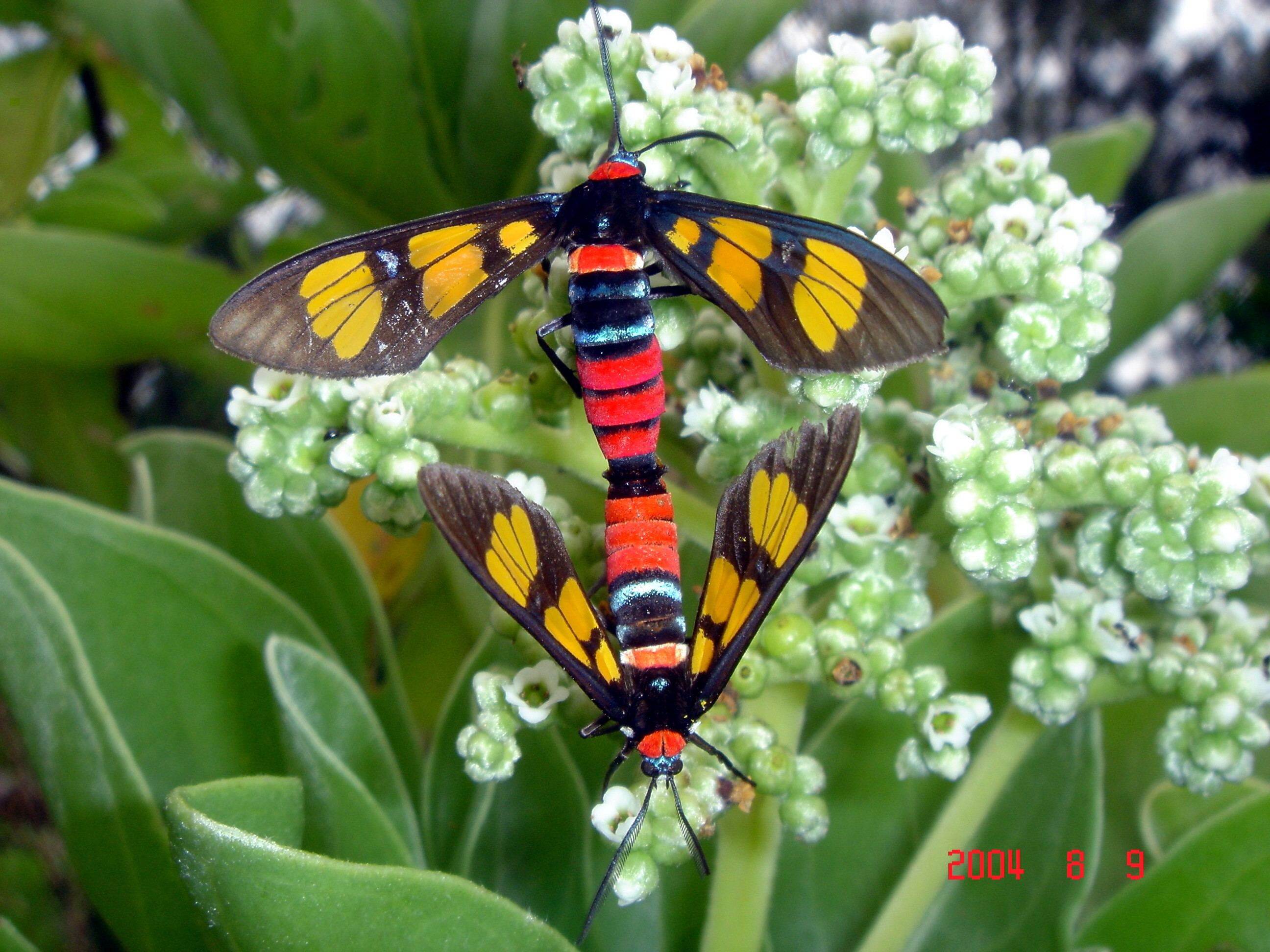 Colorful Insects Image...