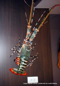 Stunning lobster displayed gives restaurant credibility as a real seafood establishment.